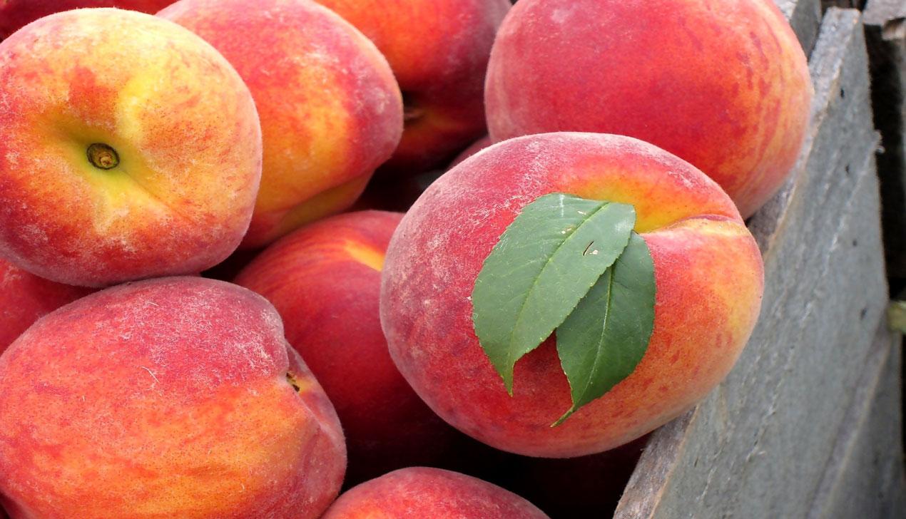 Персики. Колонка Евгении Добровой