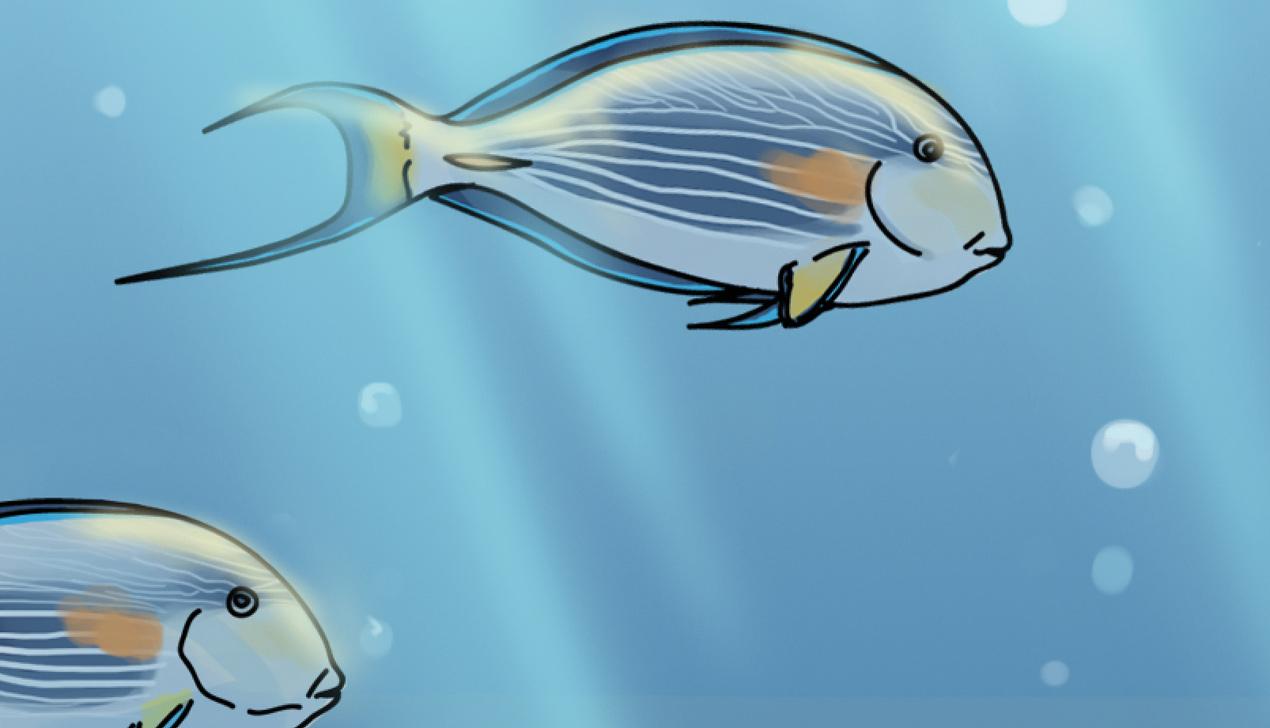 Рыбка-хирург. Колонка Евгении Добровой
