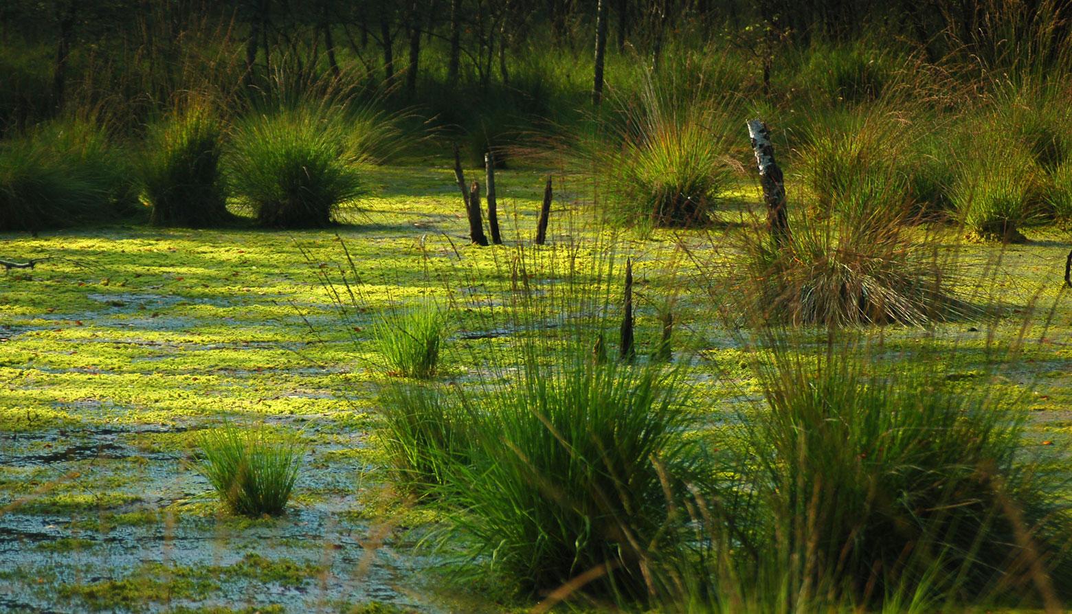 Люди на болоте. Колонка Александра Демидовича