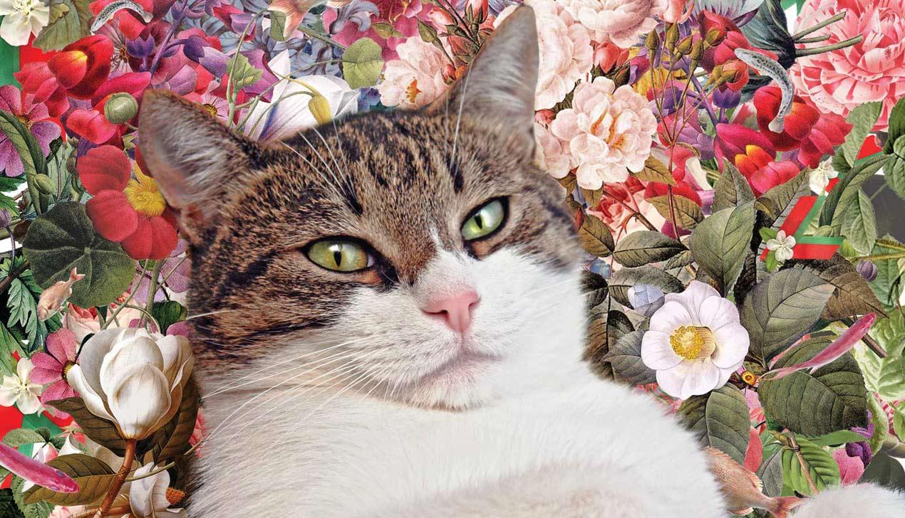 Политик Барсик: «Президент какой страны сможет отказать коту в кредитах?»