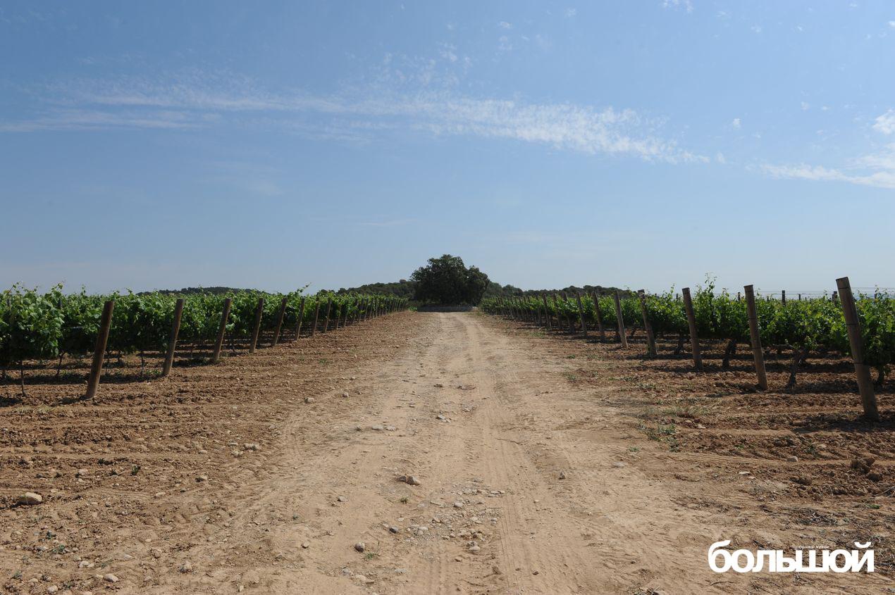 Виноградники в Каталонии