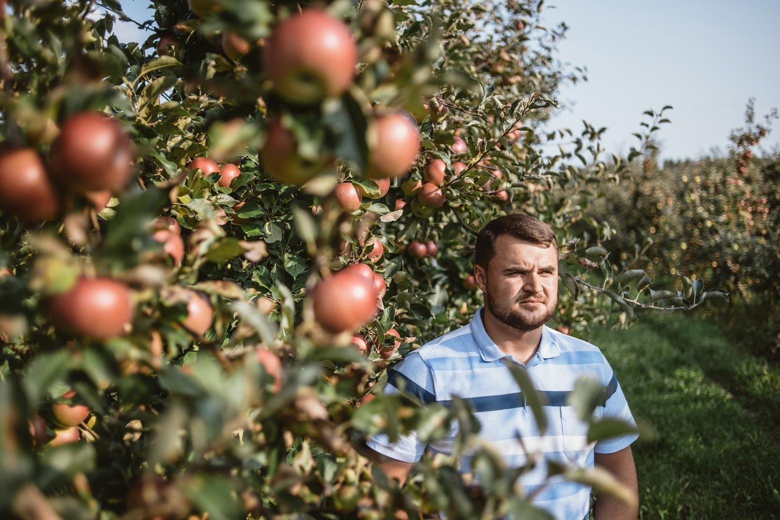 Яблочная ферма в Ольшанах