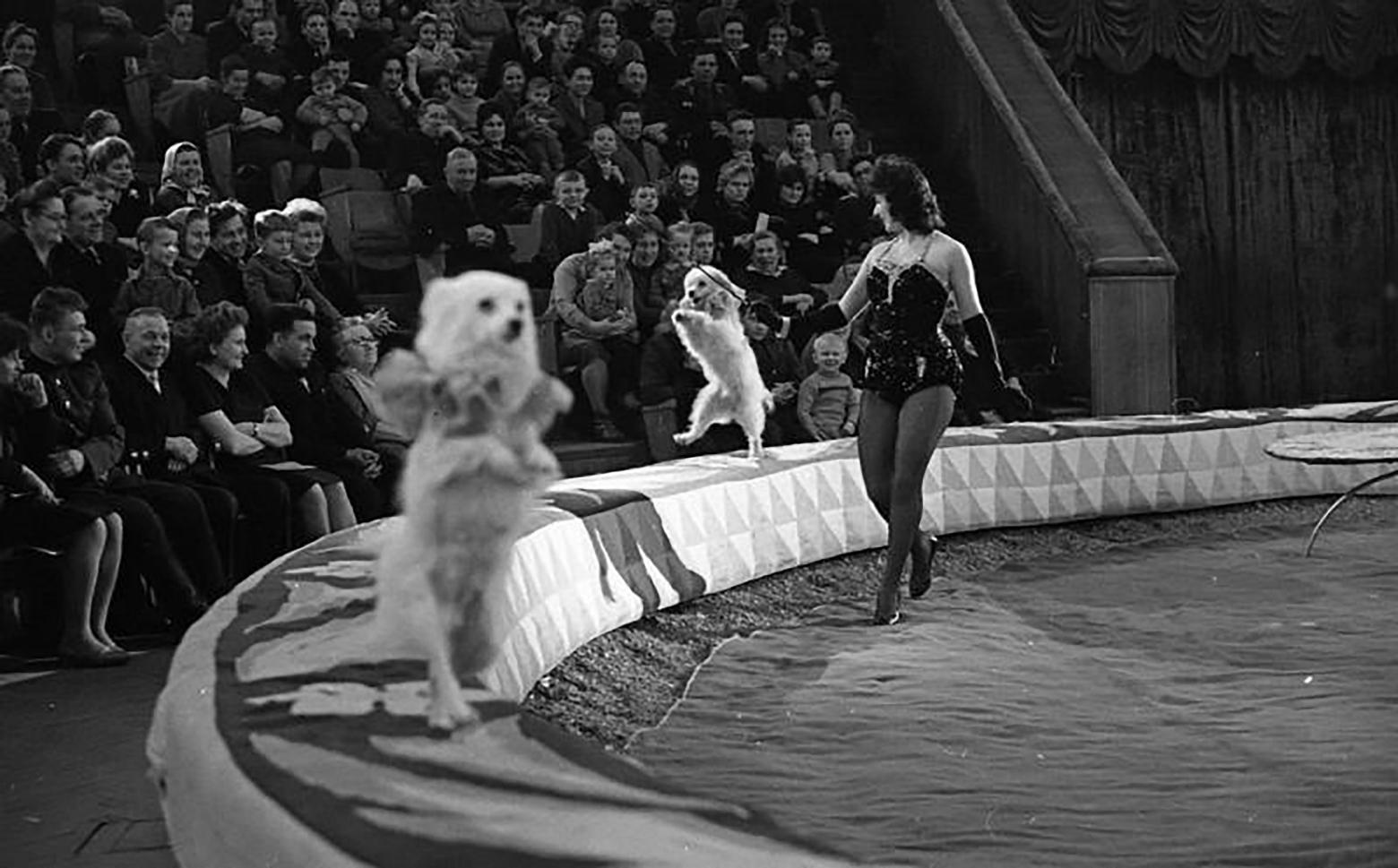 дрессировщица собак Ирина Аверьино на арене Белорусского государственного цирка
