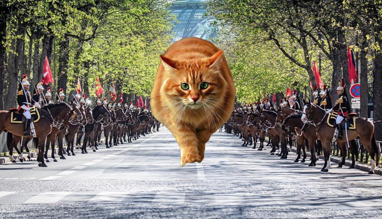 Смотрите, как котики украшают фото с военной техникой